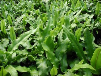 Rosa  'Eye For You'