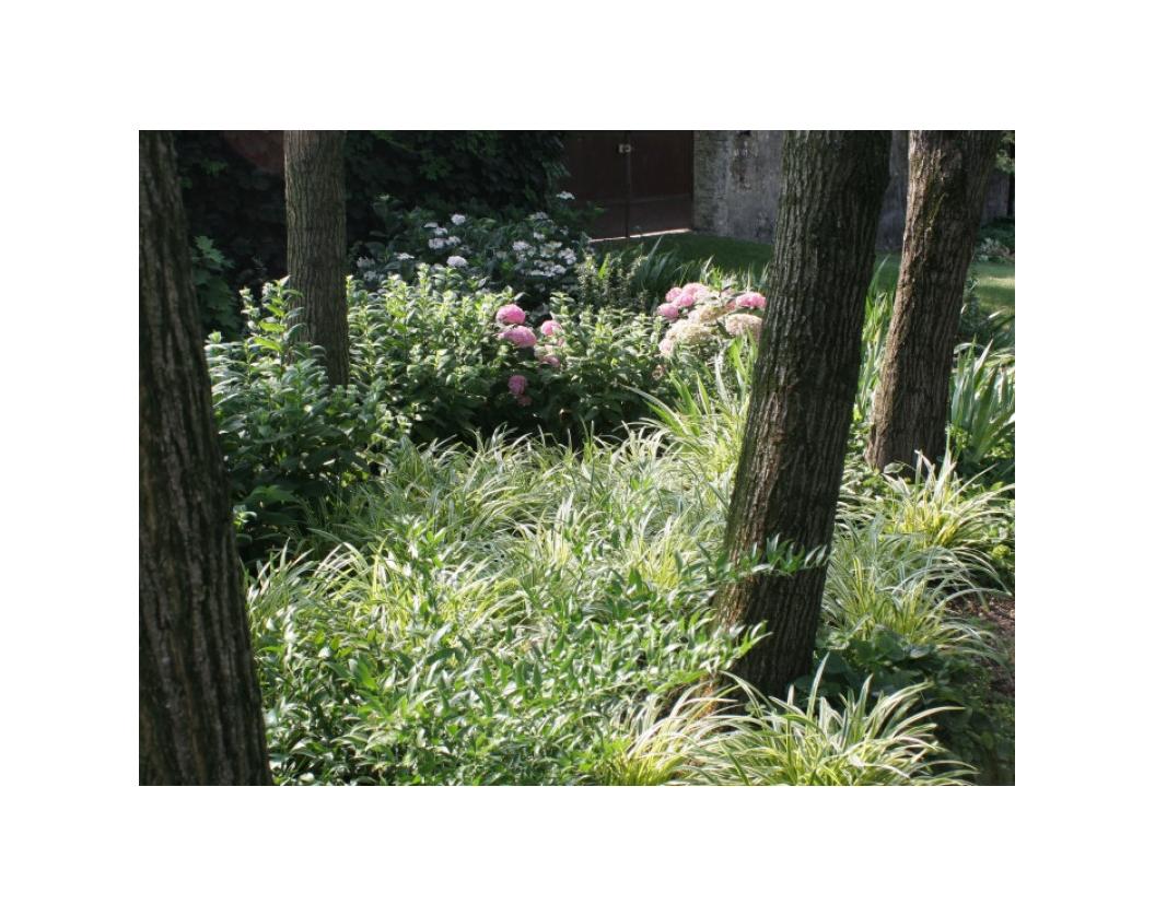Realizzazione giardino d'ombra